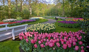 Тур в Амстердам - парк Кёкенхоф