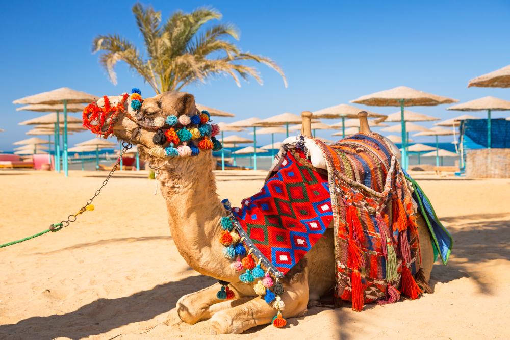 фото Тунис возвращается