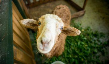 фото экскурсия в Несвиж и контактный зоопарк